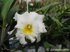 Flower35