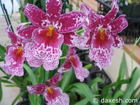 Flower36