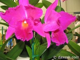 Flower46